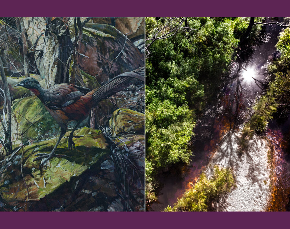 Stanthorpe Regional Art Gallery — Imagined Boundaries Photography and Painting Exhibition